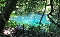 遊佐町の「丸池さま」