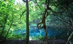 新緑美しい丸池様