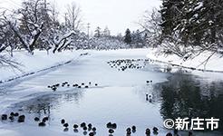 冬の最上公園