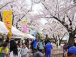 楯山公園桜まつり