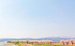 桜堤と月山を望む