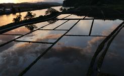 透明な夕方